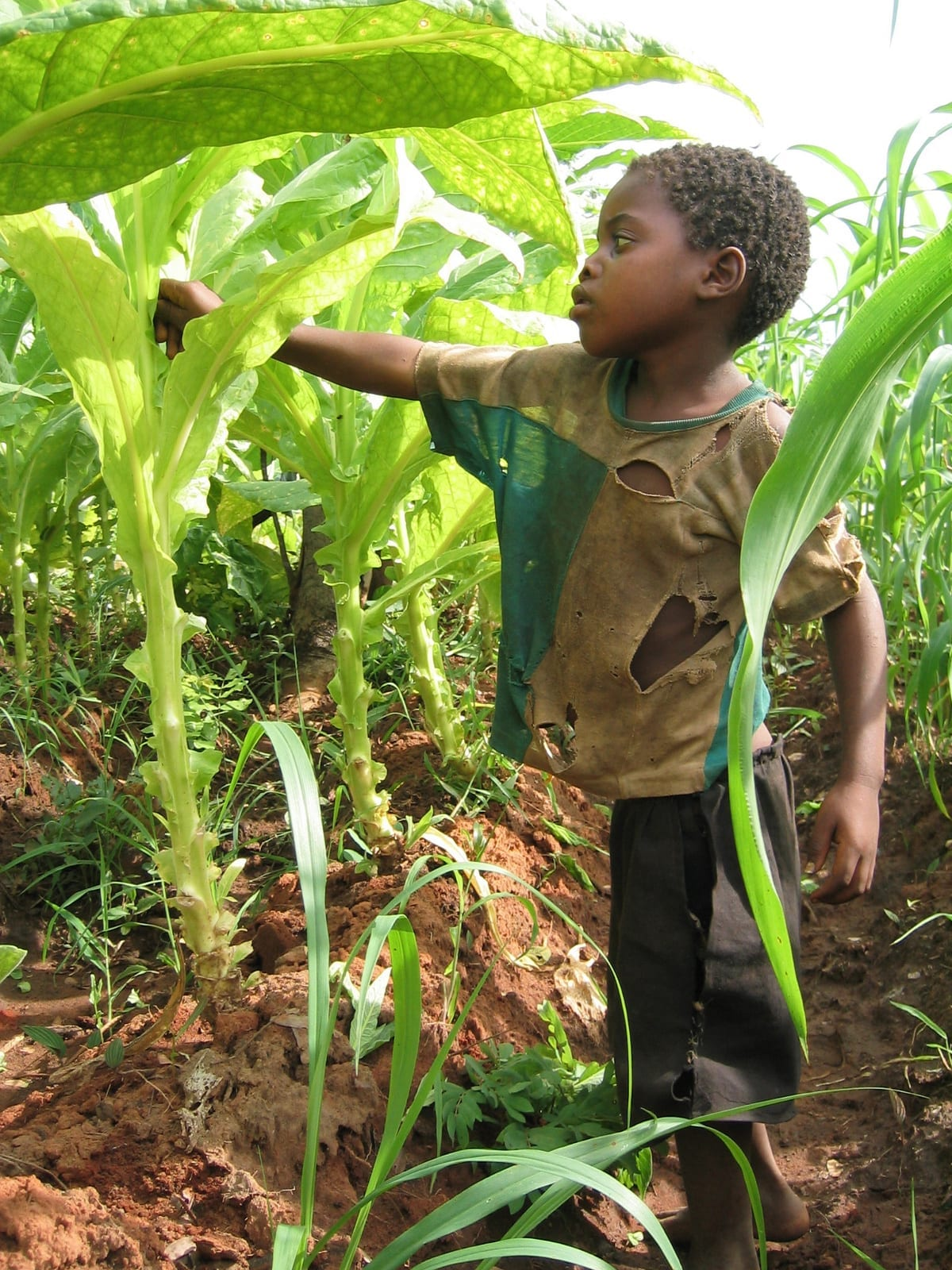 write an essay on farmers and landless labour
